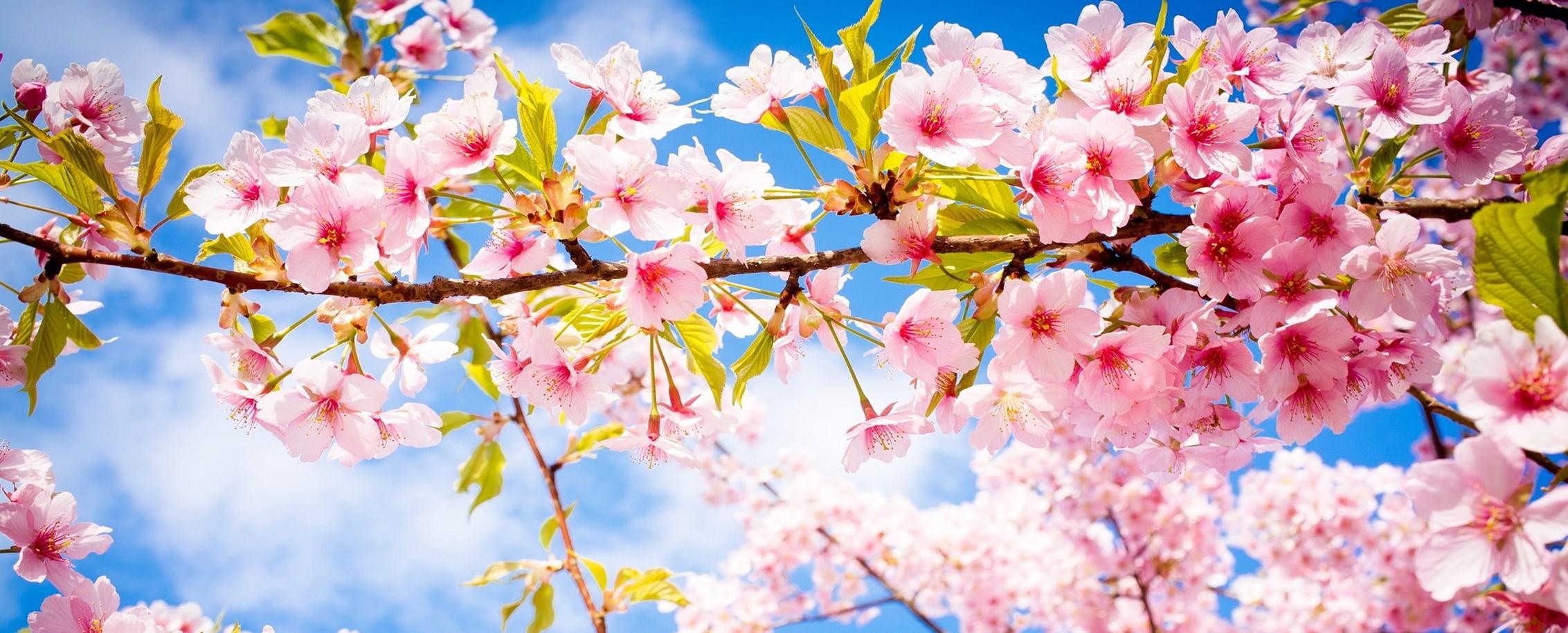 Spring into Spring.